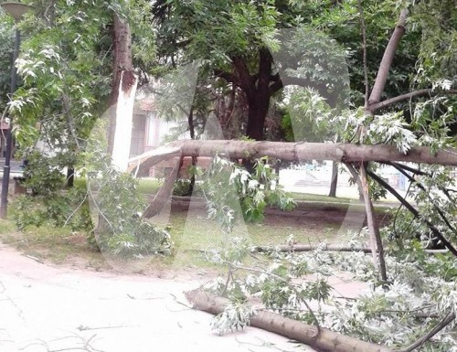 drvo u parku